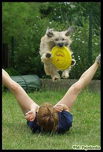 Vigo z frisbee